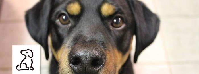 pet care services haywards heath